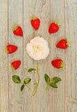 在一朵白色玫瑰附近被排行的新鲜的草莓 免版税库存照片