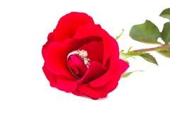 在一朵红色玫瑰的一只钻戒 免版税库存图片