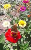 在一朵红色花的蝴蝶在阳光下 免版税库存照片
