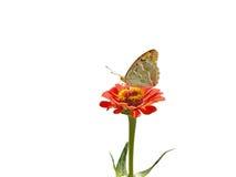 在一朵红色花的蝴蝶 免版税图库摄影