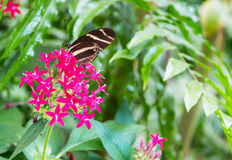 在一朵美丽的花的蝴蝶 库存照片