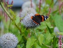 在一朵花的一只五颜六色的蝴蝶在夏天 免版税库存照片