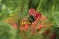 在一朵花的一只土蜂在森林里 库存照片