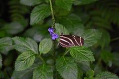 在一朵花的美丽的蝴蝶在庭院里 免版税库存图片