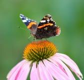 在一朵花的美丽的蝴蝶本质上 库存照片