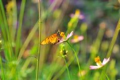 在一朵花的蝴蝶与背景bokeh 库存照片