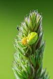 在一朵花的绿色蜘蛛有绿色背景 免版税库存照片