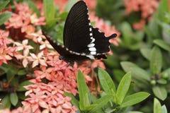 在一朵花的蝴蝶在泰国 免版税库存照片
