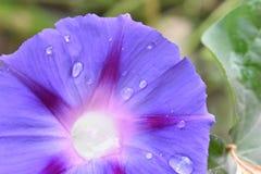 在一朵蓝色花的下落 免版税库存图片