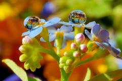 在一朵蓝色花的露滴 库存照片