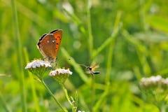 在一朵野花的蝴蝶在夏日 免版税库存图片