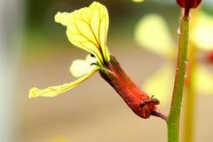 在一朵黄色花的蚂蚁 免版税库存照片