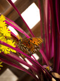 在一朵黄色花的蝴蝶有红色背景 库存图片