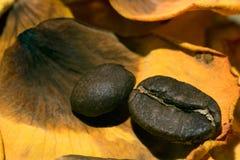在一朵黄色玫瑰的一个干燥瓣的咖啡豆 库存图片