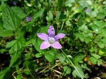 在一朵紫色花的小的蜘蛛 免版税库存图片