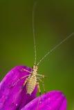 在一朵紫色花的昆虫 免版税库存照片