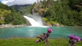 在一朵紫色花的蜘蛛 免版税库存图片