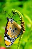 在一朵绿色花的蝴蝶 库存图片