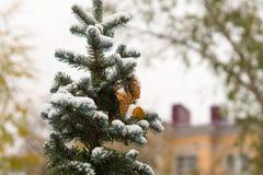 在一杉木thee的第一雪有城市背景 免版税库存照片