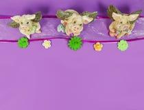 在一条丝带的飞行猪与在紫色背景-文本的室的花 免版税库存图片