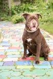 在一条五颜六色的道路的狗 库存图片