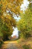 在一条人行道的秋天隧道乱丢与下落的叶子 免版税图库摄影