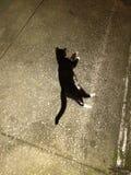 在一条具体车道的黑&白色猫 免版税库存图片