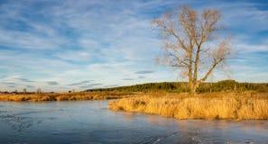 在一条冻河的秋天风景有在俄罗斯,乌拉尔的银行的树的 免版税库存照片