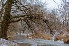 在一条冻河附近的大树 免版税库存图片