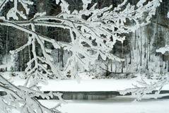 在一条几乎冻河的岸的冬天风景可看见通过一棵树的冰冷的分支在前景的 免版税图库摄影