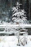 在一条几乎冻河的岸的冬天风景 免版税库存图片