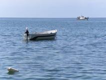 在一条划艇的孤立海鸥在Ohrid湖, R Macedonija 免版税库存照片