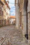 在一条古老石街道上的狗在市Istria的莫托文 库存照片