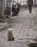 在一条古老老街道的狗在小中国村庄 库存图片
