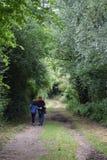 在一条叶茂盛车道下的平安的漫步在英国乡下 库存图片