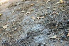 在一条含沙路的秋叶 库存照片