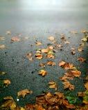 在一条多雨路下落的秋叶带领使模糊 免版税库存照片