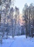 在一条多雪的森林公路的柔和的冬天桃红色早晨 库存图片