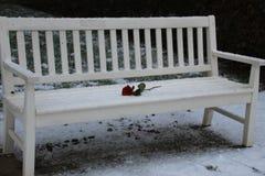 在一条多雪的长凳的孤独的玫瑰 免版税库存图片