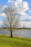 在一条宽河的河岸的高不生叶的树 免版税库存照片
