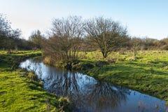 在一条小小河反映的光秃的树 免版税库存图片