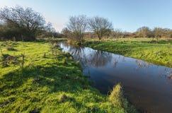 在一条小小河反映的光秃的树 图库摄影