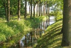 在一条小小河反映的高大的树木 图库摄影