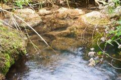 在一条小小河的蚊子 图库摄影