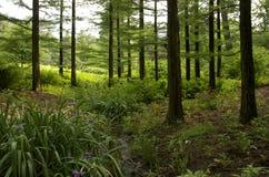 在一条小河旁边的花在森林里 免版税库存照片