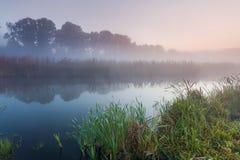 在一条小河的早晨薄雾 免版税库存照片