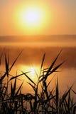 在一条小河的有薄雾的早晨 免版税库存照片