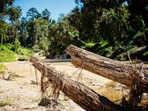 在一条小河的死的树在洪水以后 免版税库存图片