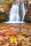 在一条小河的瀑布在秋天森林里 免版税库存图片