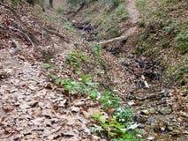 在一条小河的狭窄的木bridbe在木头 库存图片